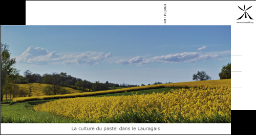 The culture of pastel in Lauragais